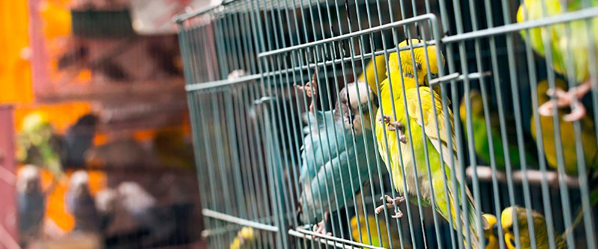 Птичий рынок на ТК Садовод в Москве